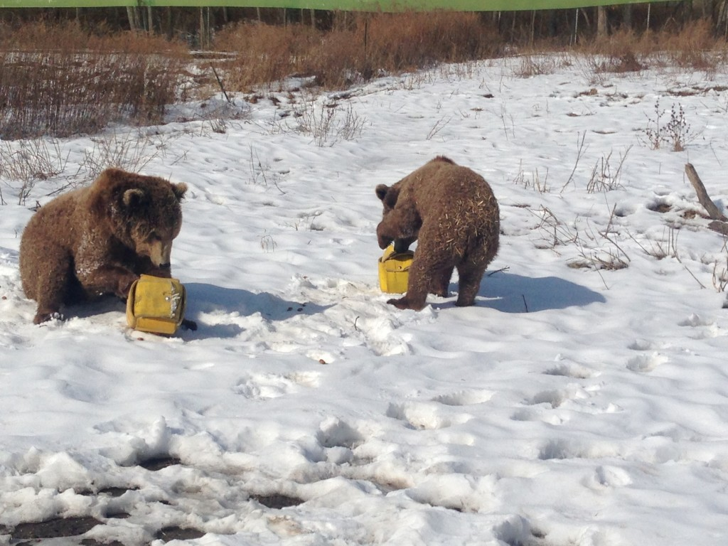 spot_and_scarlett_play_with_fire_hose_enrichment_cubes